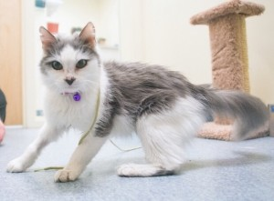 Whisper our Aurora clinic kitty on location!