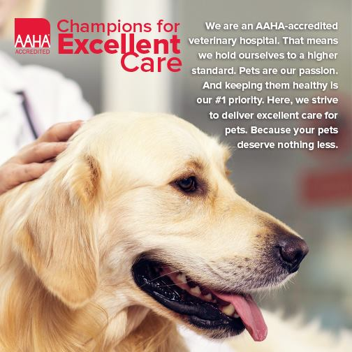 A thank-you from Dr. Eisenhauer: To all of our clients, staff, friends, family members and patients, I want to thank you!  July 22 has been dedicated as AAHA Accredited Hospital Day, and many of you know that even as a newer veterinary hospital, we managed to be accredited since before our one year anniversary!  What does this mean?  We have voluntarily been evaluated on approximately 900 rigorous veterinary standards to achieve this recognition, and are subjected to periodic reviews to ensure we maintain this level of care.  Each day we hold ourselves to these high standards that allow us to provide a safer, cleaner environment for your furry family members, coupled with better medicine, surgical and dental practices to keep your pets as healthy as we can for as long as we can.  It's important to us because it matters to you, your pets and our own pets.  And I promise that we will continue to work each day to be the partners you need and expect to be there for you and your family.  We could not do it without your support, and we wouldn't love doing it without your wonderful pets - they make it worthwhile every day!