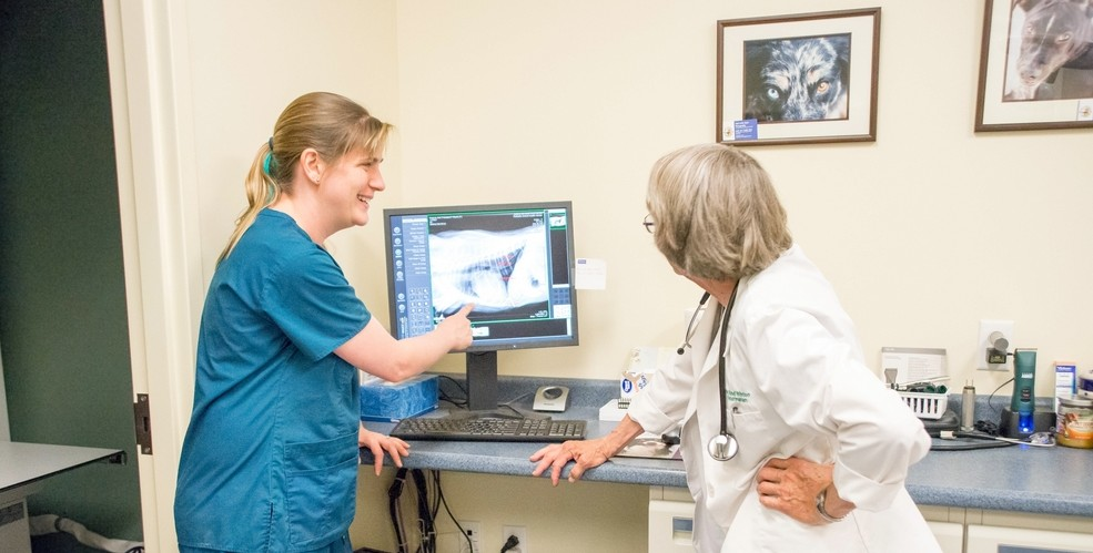 Veterinarians Dr. Winton (right) and Dr. Eisenhauer (left) discuss the findings on a canine chest radiograph.