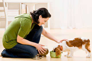 veterinary consultations for nutritional wellness