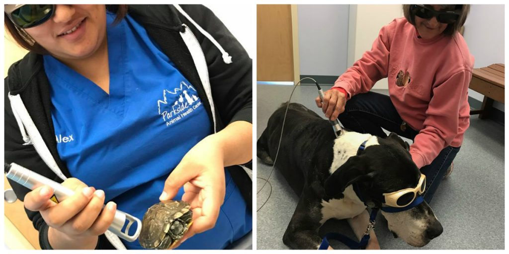 laser treatments being used on a turtle and a dog