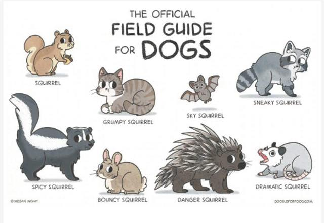 Many of you are home from work today in recognition of the achievements and legacy of Dr. Martin Luther King, Jr.  His efforts changed and continues to change hearts and minds. But do you know that your dog likely thinks you're home celebrating THEIR favorite holiday, National Squirrel Appreciation Day?? Kudos to www.doodleforfood.com for this perfect diagram!!