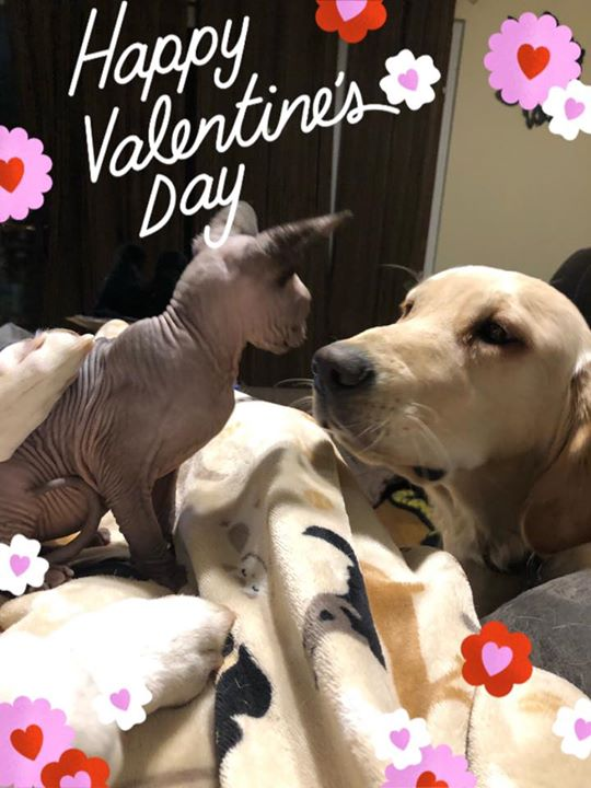 Show us the love!! If you've got a pic on your phone of your furry (or not-so-furry) valentine, share it below!! One pic will be chosen at random (random number generator) tomorrow and will receive a $20 account credit. Wishing everyone a LOVE-ly day!