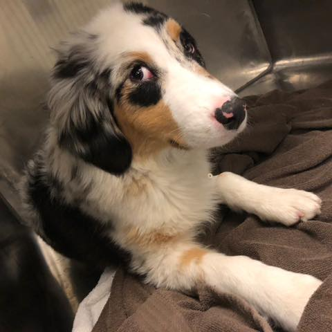 """Ear worm warning!! This is Annie Oakley, and she has had all of us singing Michael Jackson all day. Our intern, Madison, was checking on her before her spay and asked """"Annie, are you ok? Are you ok? Are you ok, Annie?"""" You're welcome!! 😉"""