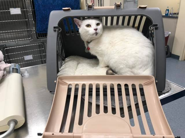 We loved Ella's carrier so much the other day that we had to share!!  Dr. Winton was able to do almost everything with her sitting comfortably inside. It would also double as a place to hang out at home to increase her comfort level being inside of it, or it collapses to pack away!! (Ella was also a lovely girl for her visit!! Way to go!!)  https://www.amazon.com/dp/B00EI3ZKP0/ref=cm_sw_r_sms_c_api_i_QGxxDbHS3BRJE